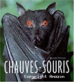 Chauves-Souris